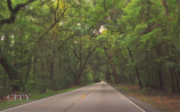 Driving-From-Charleston-to-Kiawah-South-Carolina