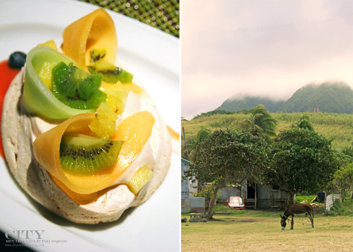 City Style and Living Magazine st kitts and nevis four seasons wild donkey