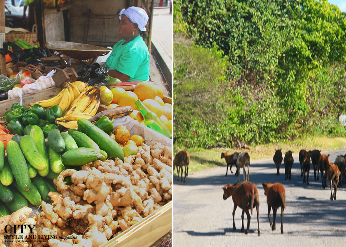 City Style and Living Magazine st kitts and nevis market and goats