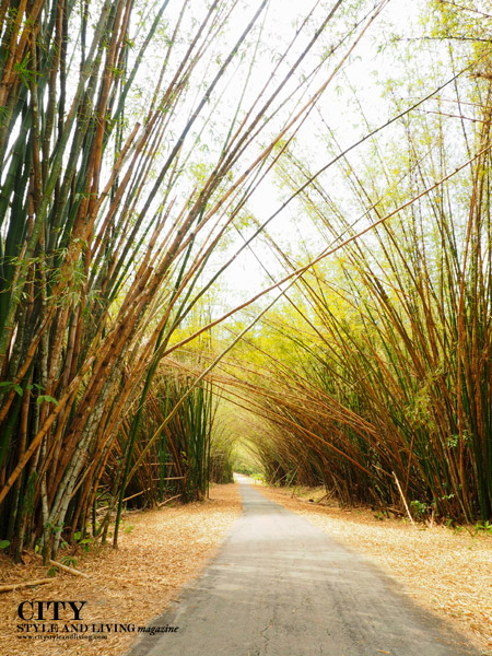 Bamboo Cathedral Chaguaramas Trinidad K and S Media