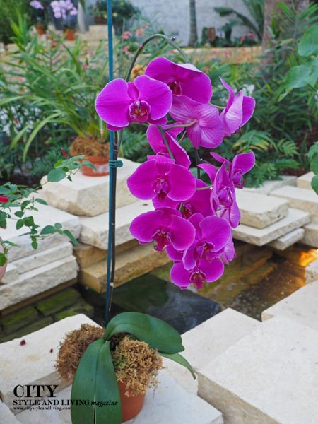 Orchid inside the Conservatory