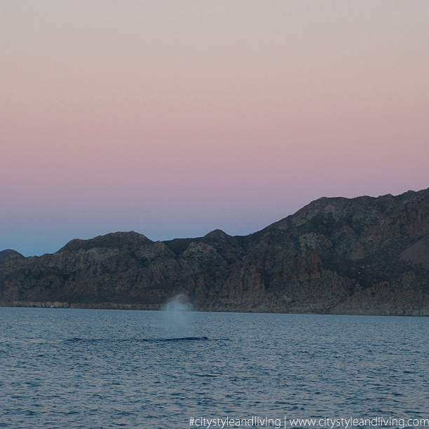 sunset and whale in loreto Mexico K and S Media