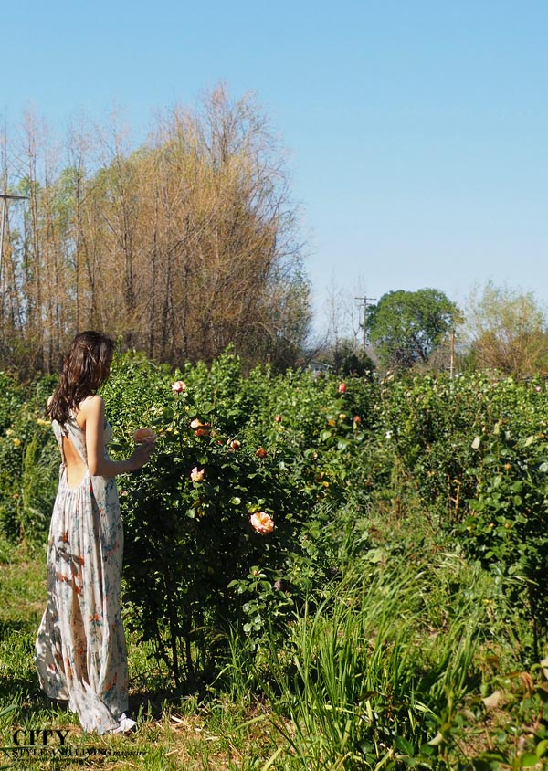 City Style and Living Magazine Dragonfly Floral fashion blogger Healdsburg maxi dress