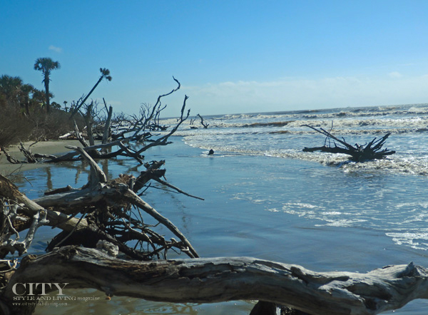 Exploring The Boneyard (Boneyard Beach) at Bull Island with Coastal Expeditions