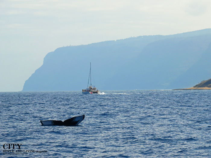 City Style and Living Magazine Captain Andy's Nursing Whale Calf kauai