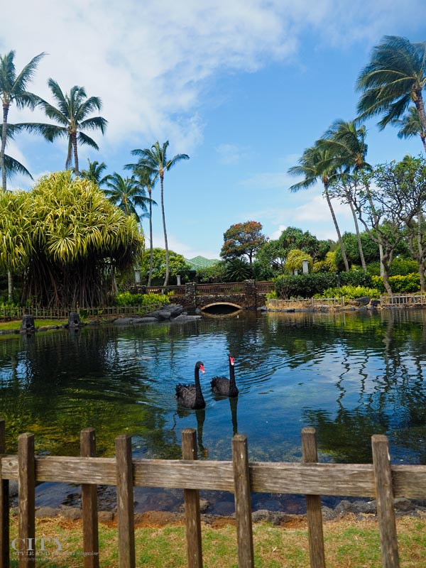 City Style and Living Magazine Grand Hyatt Kauai Swans