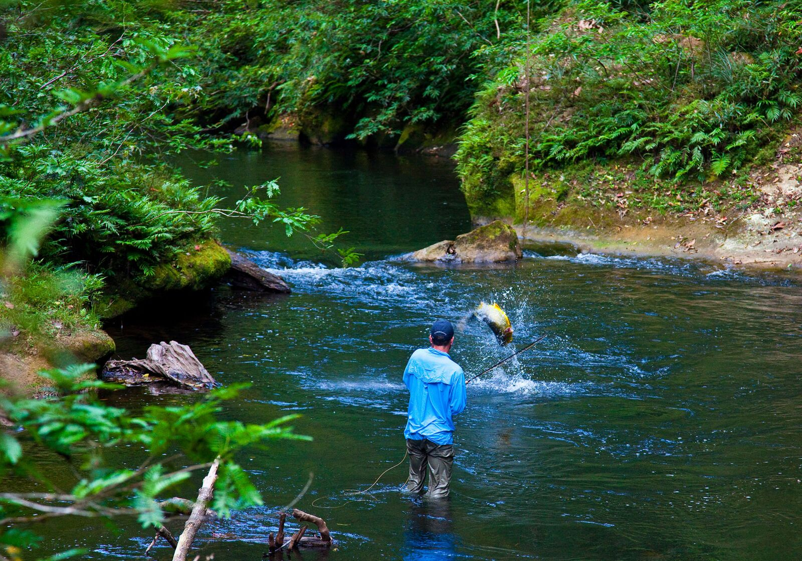 Fish for golden dorado on a freestone stream in Bolivia with Frontiers.