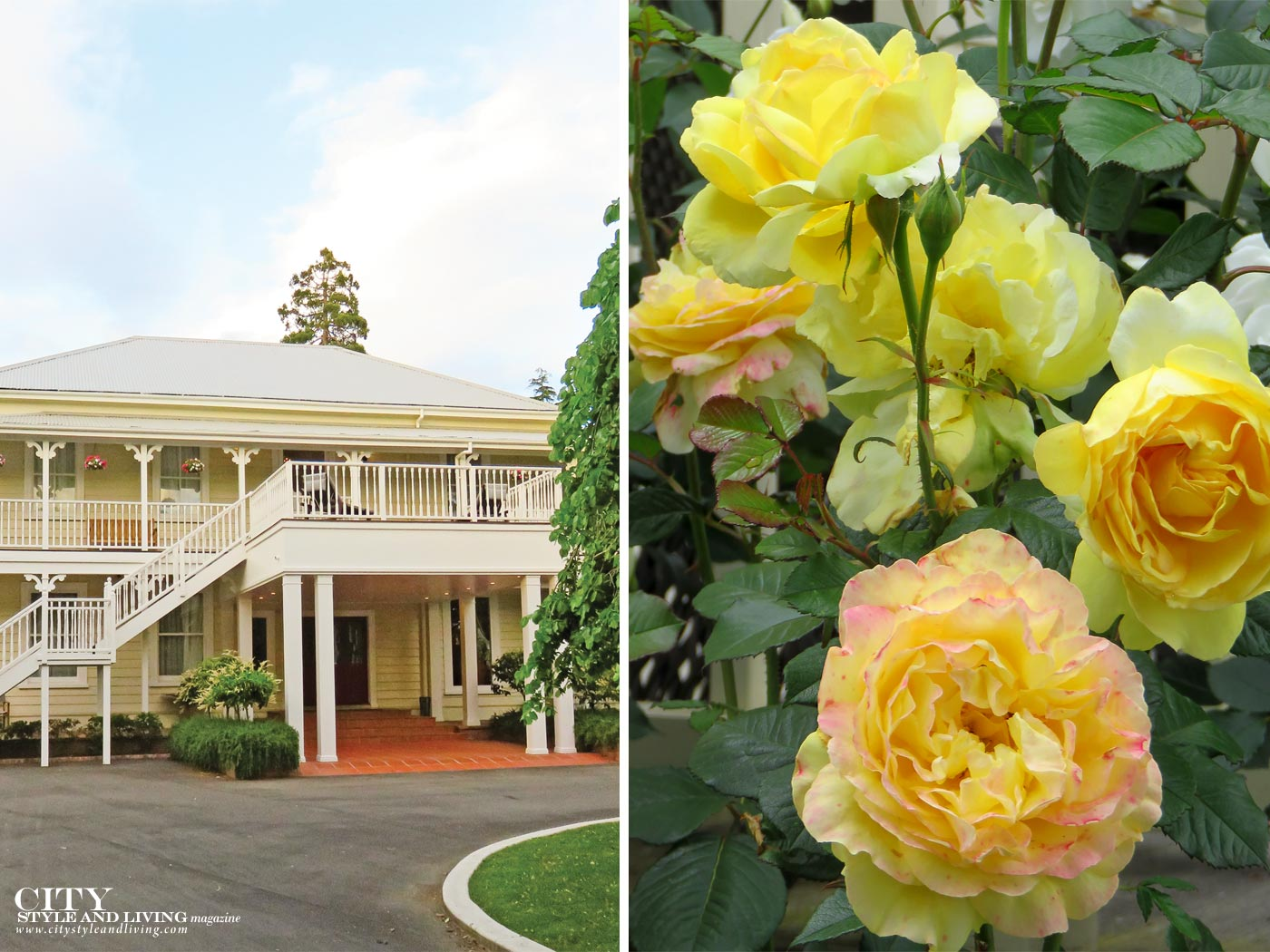 City Style and Living Magazine Mangapapa Hotel Napier New Zealand North Island back of hotel, and yellow roses