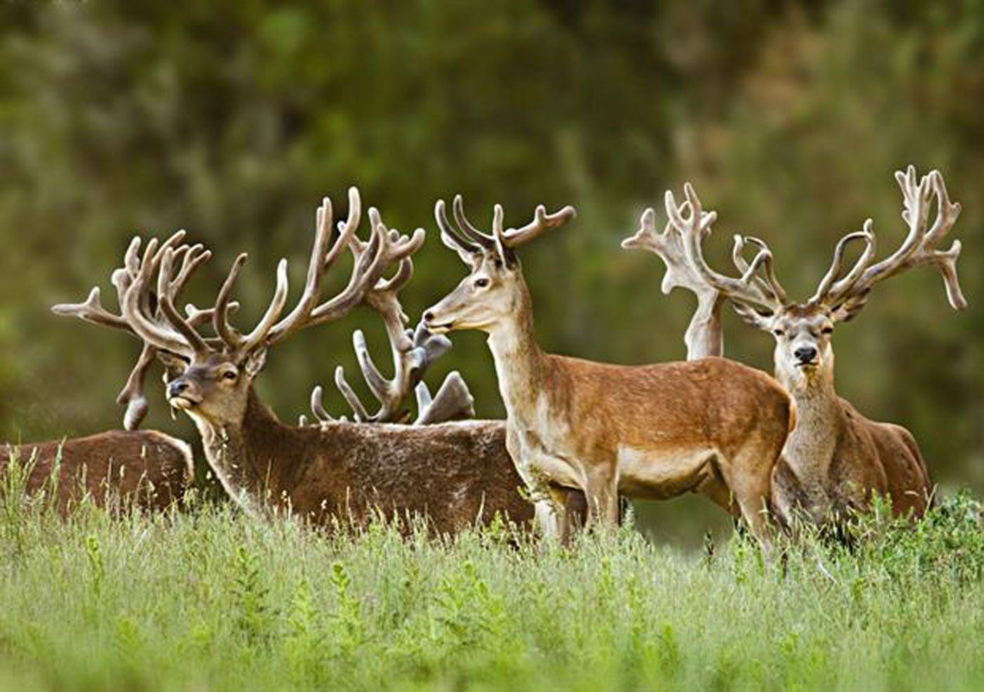 City Style and Living Magazine treetops lodge and estate deer in field