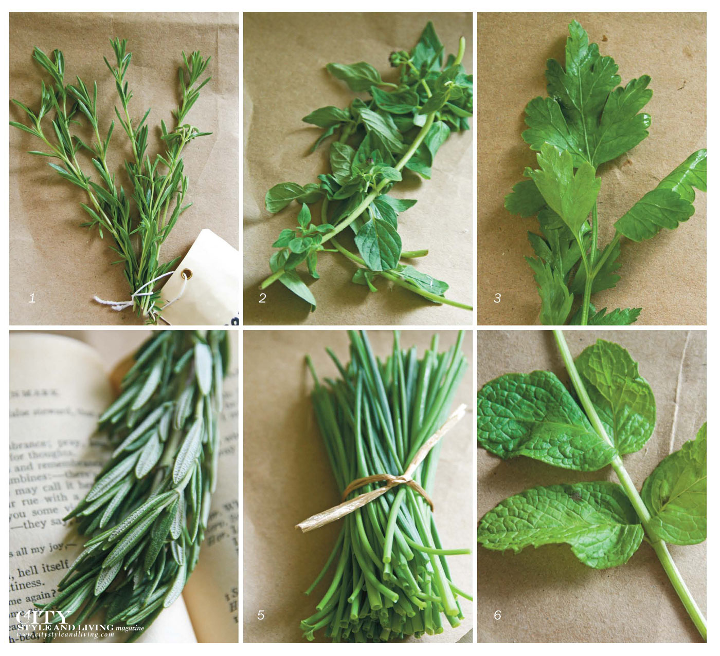 City Style and Living Magazine herbs you should know