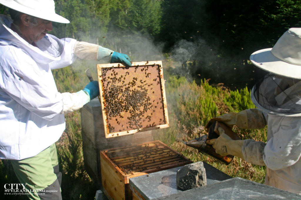 City Style and Living Magazine Travel The Azores Portugal Furnas Lake Villas Beekeeping