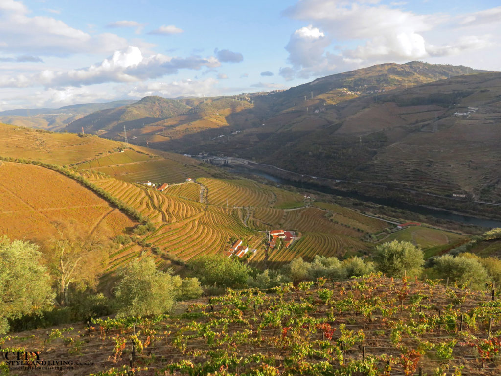 City Style and Living Magazine Travel Portugal Wine and Spirits Douro Valley landscape golden vineyards