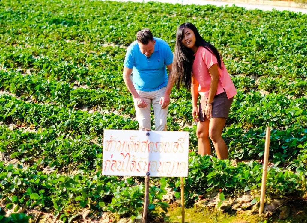 City Style and Living Magazine Edible Northern Thailand: The Roger Van Damme Chronicles Sven Van Coillie van Damme and a guest in the strawberry fields