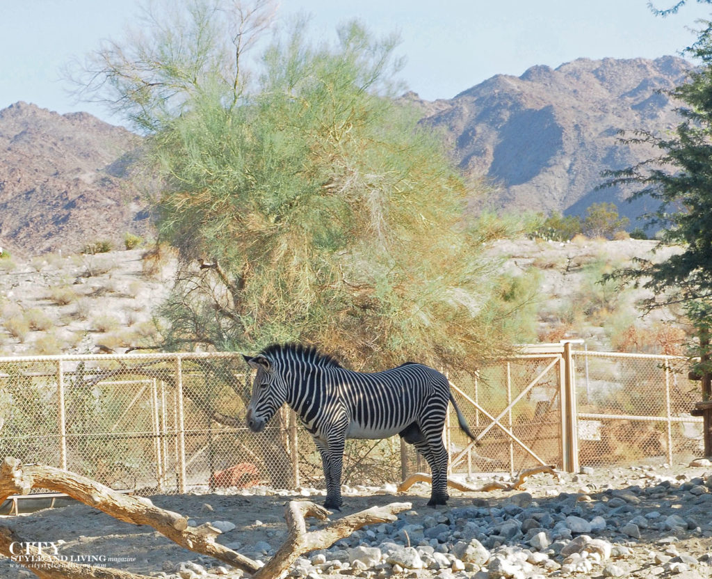 City Style and Living Magazine Winter 2018 Travel Greater Palm Springs California Desert Zoo