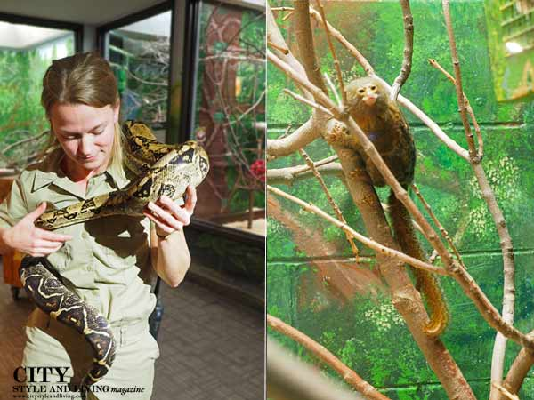 Zookeeper with Snake and Marmoset at Lincoln Children's Zoo
