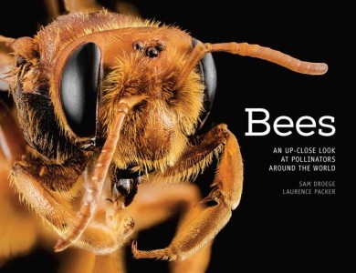 Bees An Up Close Look at Pollinators Around the World