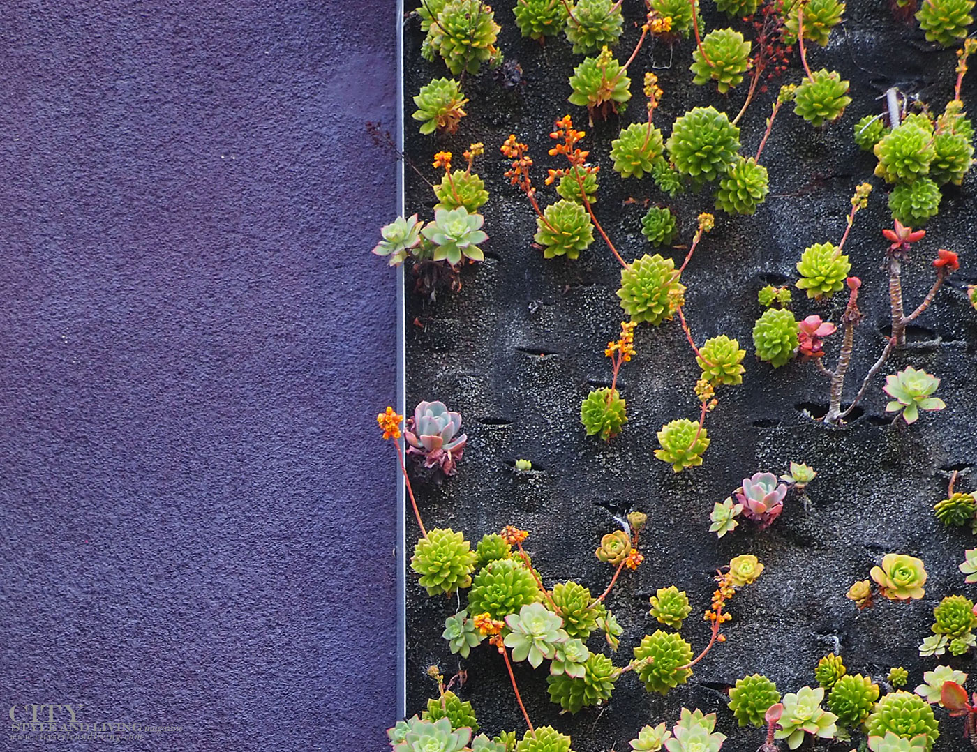 City Style and Living Magazine Summer 2019 Hotels Avenue of the Arts Costa Mesa succulent wall