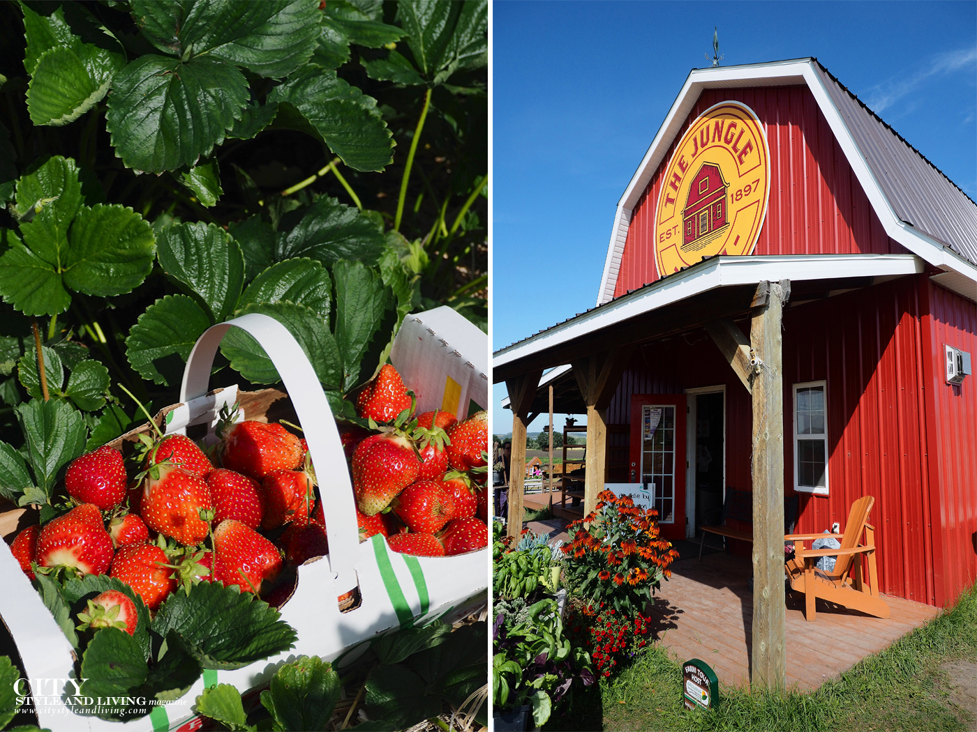 City Style and Living Magazine Travel Foodies Guide Red Deer Alberta red barn and strawberries