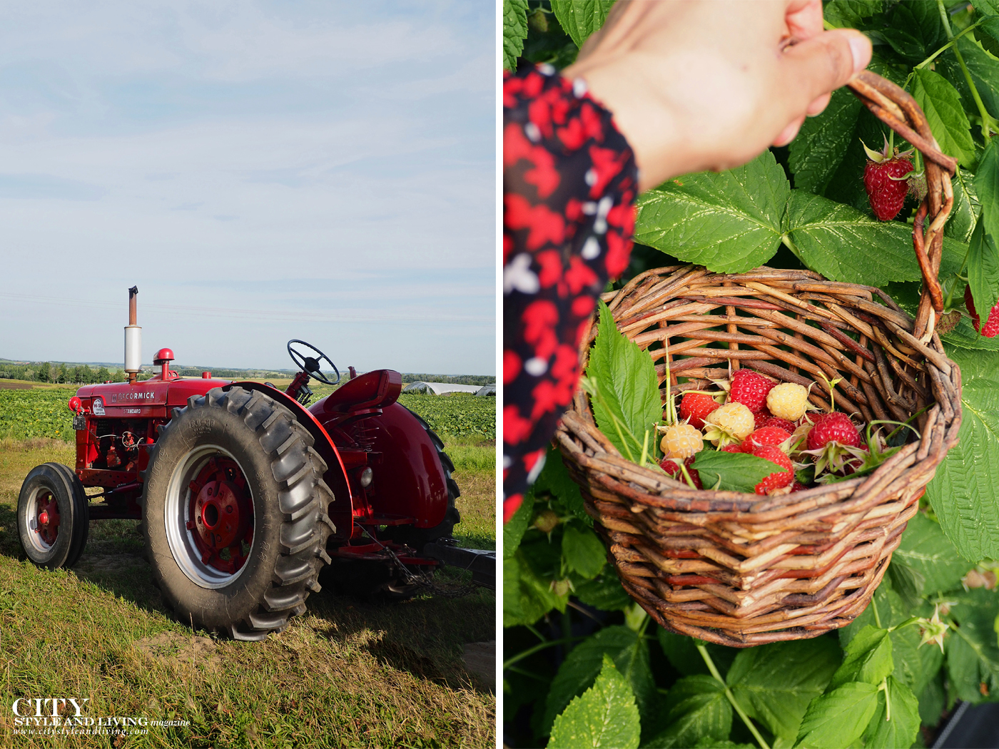 City Style and Living Magazine Travel Foodies Guide Red Deer Alberta The jungle farm tractor and raspberries