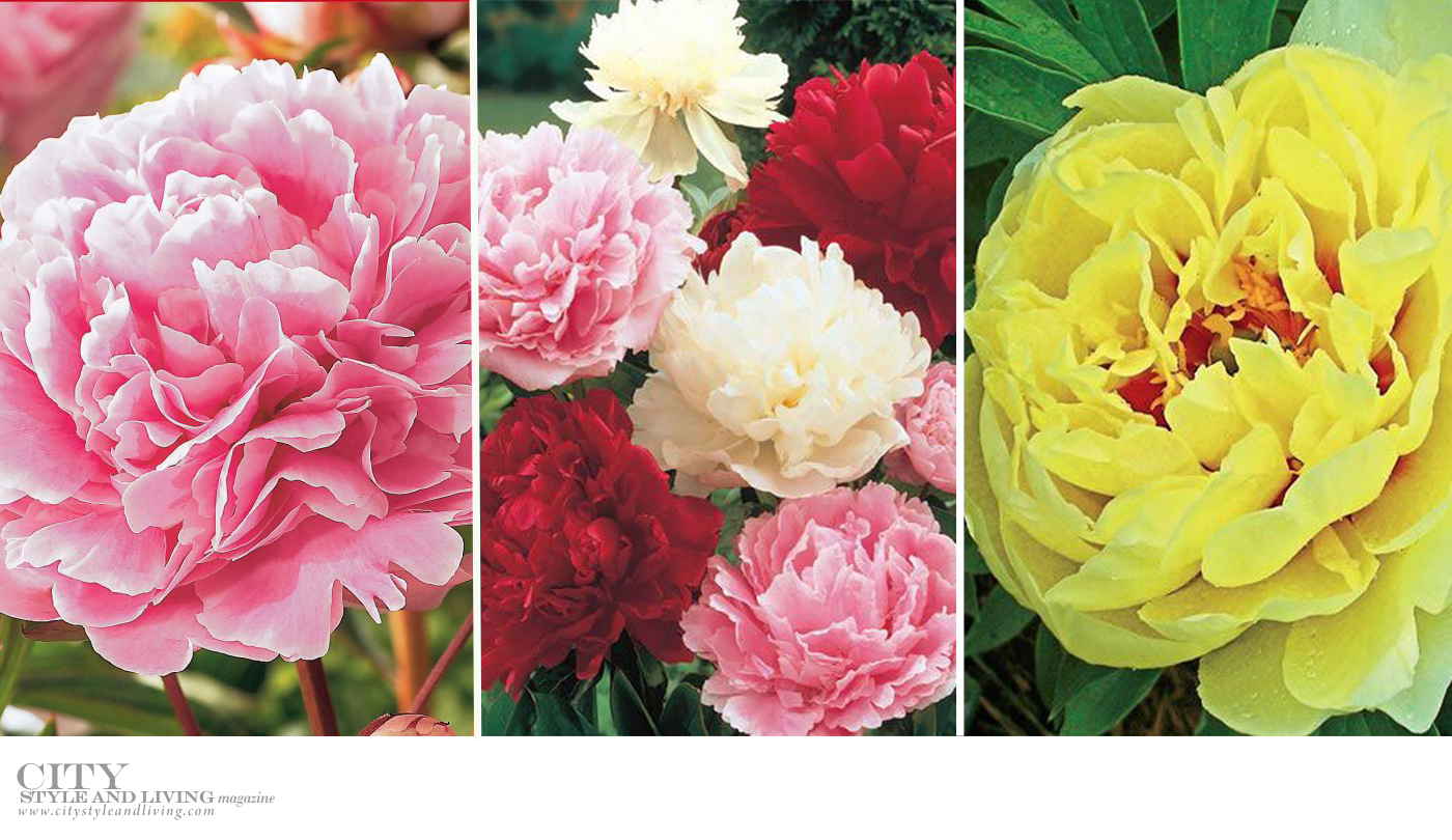 City Style and Living Magazine Healthy Living Plants to grow this season peonies