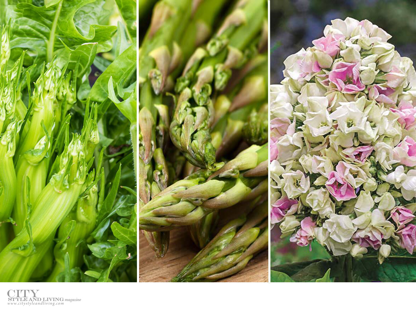 City Style and Living Magazine Healthy Living Plants to grow this season puntarelle and asparagus