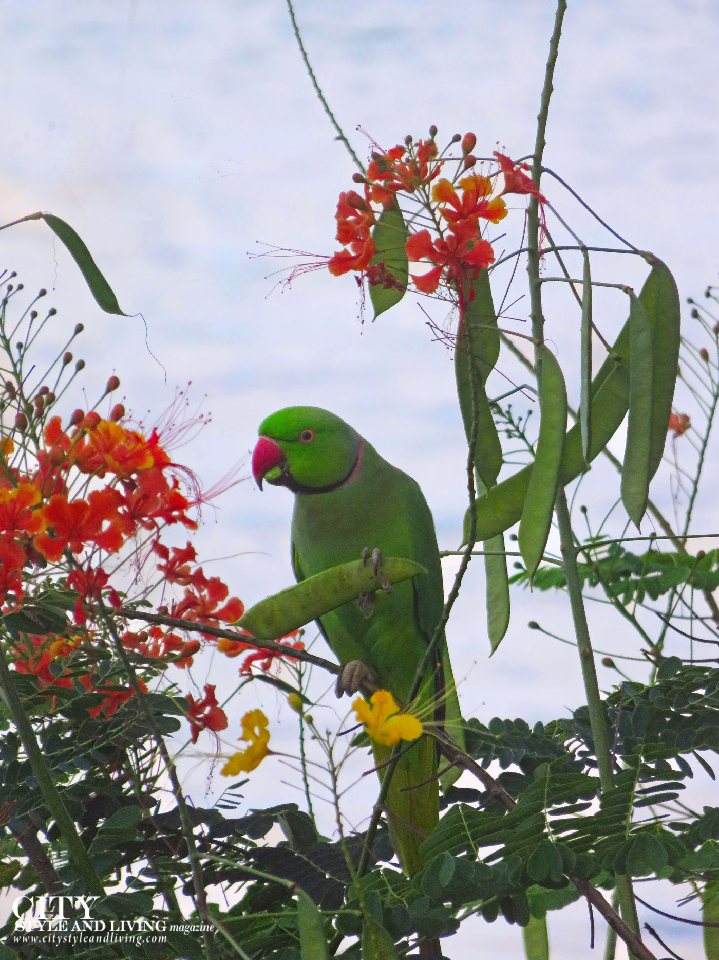 City Style and Living Magazine Winter 2019 Barbados Yellow Bird hotel Kailash Maharaj green bird in tree