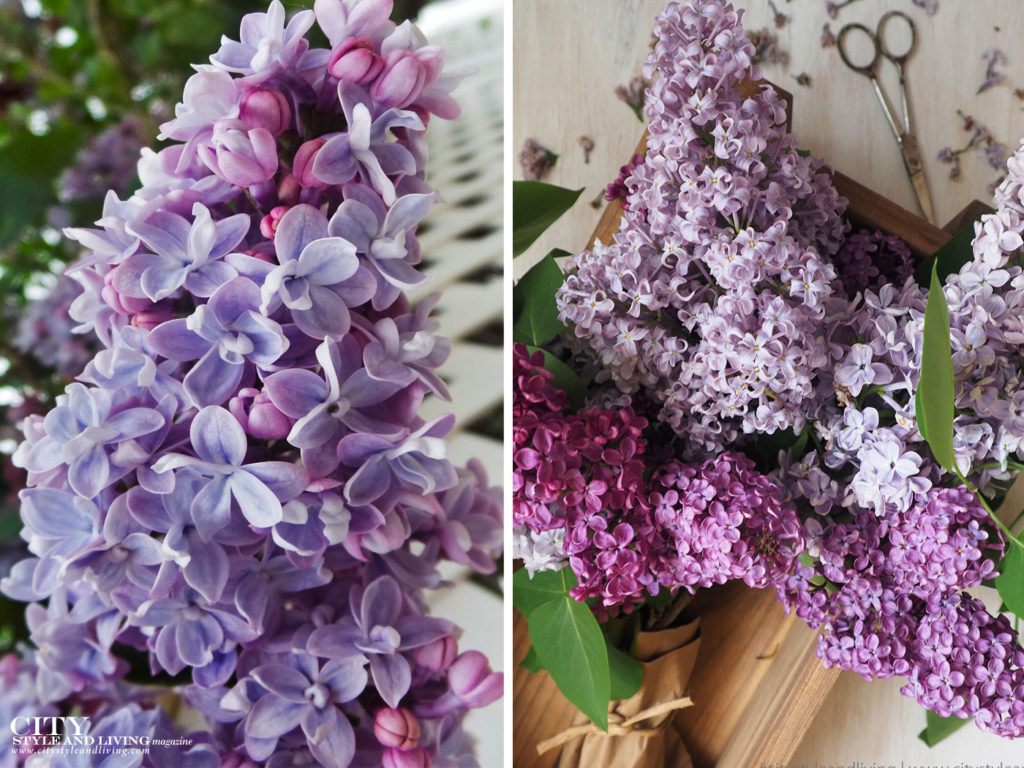 City Style and Living Magazine spring 2020 loving lilacs closeup