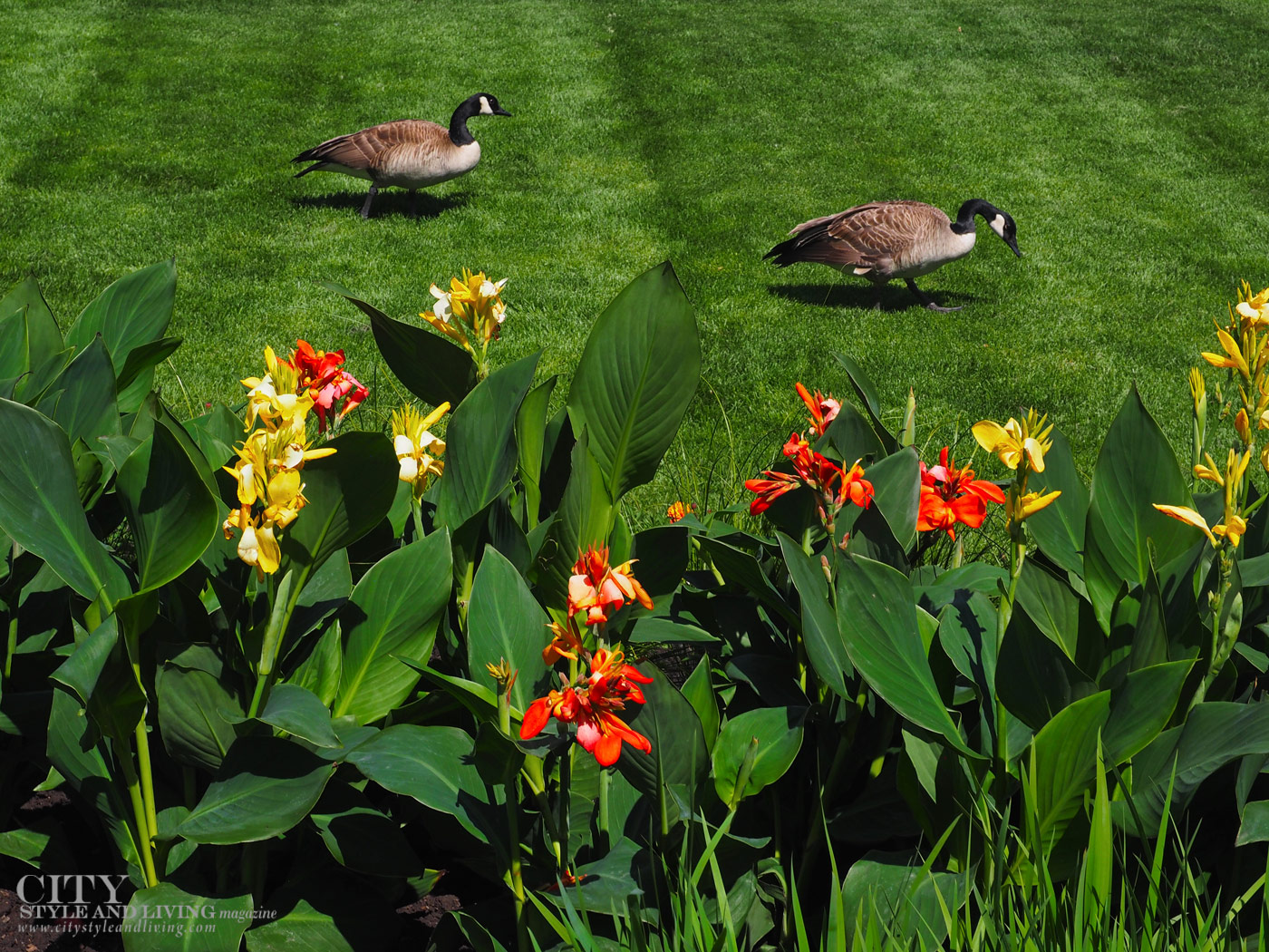 City Style and Living Spring 2021 Garden Troubleshooting
